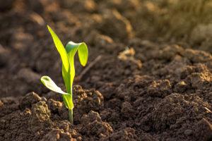 fertile-ground-single-plant-in-dirt